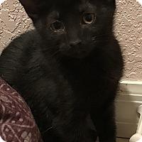 Adopt A Pet :: Luke - Tampa, FL