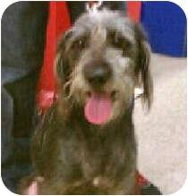 Becca   Adopted Dog   ...