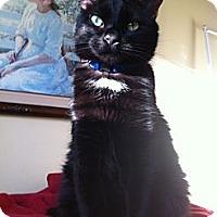 Adopt A Pet :: Dexter - West Dundee, IL