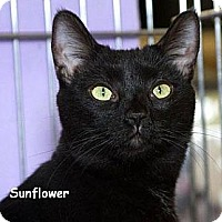 Adopt A Pet :: Sunflower L. - Sacramento, CA