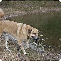 Adopt A Pet :: Snickers - Brattleboro, VT