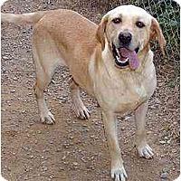 Adopt A Pet :: Goldie A - Cumming, GA