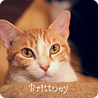 Adopt A Pet :: Brittney - Wichita Falls, TX