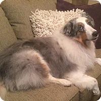 Adopt A Pet :: Keeley - Mission, KS