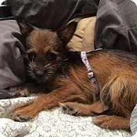 Adopt A Pet :: Petunia - Baton Rouge, LA
