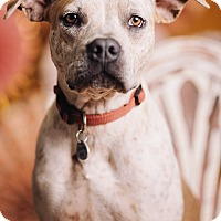 Adopt A Pet :: Ana-Mae - Portland, OR