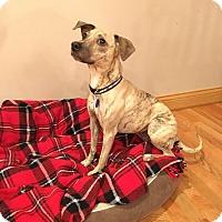Adopt A Pet :: Mona - Schaumburg, IL
