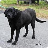 Adopt A Pet :: Dante (SCP) - Madisonville, TN