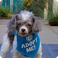 Adopt A Pet :: Guinevere - Pacific Grove, CA