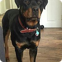 Adopt A Pet :: Sammie - Caledon, ON