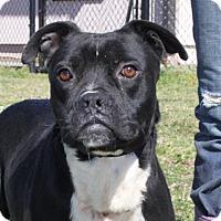 Adopt A Pet :: Raleigh - Washington, DC