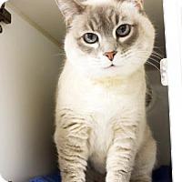 Adopt A Pet :: Grace - Atlanta, GA