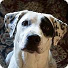 Adopt A Pet :: Gitanna