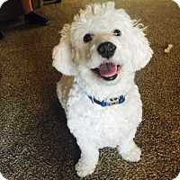 Adopt A Pet :: Tommy - Maricopa, AZ