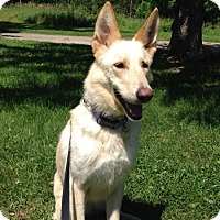 Adopt A Pet :: Nadina - Mt. Airy, MD