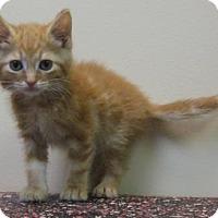 Adopt A Pet :: Trix - Gary, IN