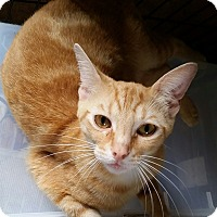 Adopt A Pet :: NOAH 9mo - Ocala, FL