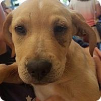 Adopt A Pet :: Freesia - Aurora, CO