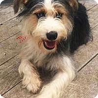 Adopt A Pet :: Henry - Oswego, IL