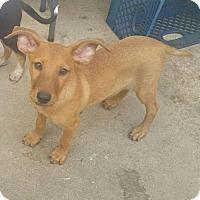 Adopt A Pet :: Vegas - Thousand Oaks, CA