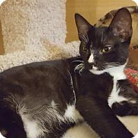 Adopt A Pet :: Mr. Wiggles - El Cajon, CA