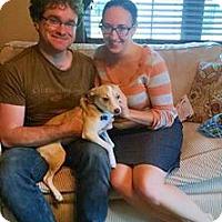 Corgi/Chihuahua Mix Dog for adoption in Northville, Michigan - zBambi - ADOPTED