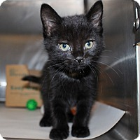 Adopt A Pet :: 23076 - Fletcher - Ellicott City, MD