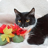 Adopt A Pet :: Alene (C16-174) - Lebanon, TN