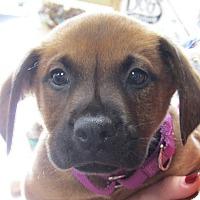 Adopt A Pet :: Nate - Suwanee, GA
