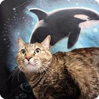 Adopt A Pet :: Erin #163334 - Apple Valley, CA