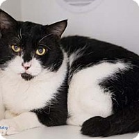 Adopt A Pet :: Baby - Merrifield, VA
