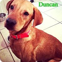 Adopt A Pet :: Duncan - Pensacola, FL