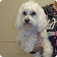 Adopt A Pet :: Sebastian - Wildomar, CA