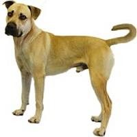 Adopt A Pet :: Tank - Inverness, FL