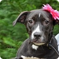 Adopt A Pet :: Baby Emmi - Marlton, NJ