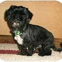 Adopt A Pet :: Harley - Mooy, AL