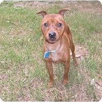 Adopt A Pet :: Sir Dillingham - Eden, NC