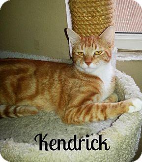 Cat Adoption Simi Valley Ca