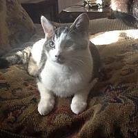 Adopt A Pet :: Robin - Morganton, NC