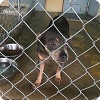 Adopt A Pet :: Mr. Grinch - Houston, TX