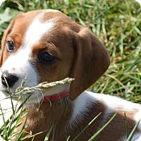 Adopt A Pet :: Chenille - Prole, IA
