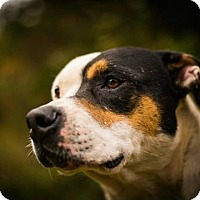 Adopt A Pet :: Max - Crescent City, CA