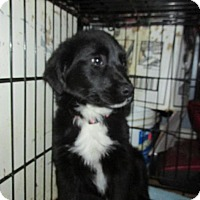 Adopt A Pet :: Kailey - Rocky Mount, NC