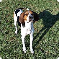 Adopt A Pet :: Wyatt - Elyria, OH