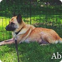 Adopt A Pet :: Abby - Valparaiso, IN