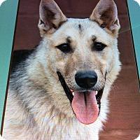 Adopt A Pet :: BEN VON BRUCKS - Los Angeles, CA