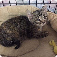 Adopt A Pet :: Samantha - Forest Hills, NY