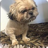 Adopt A Pet :: PEEKO - Elk Grove, CA