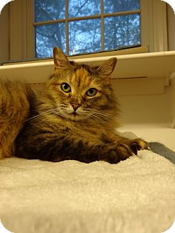Calico Cat for adoption in Parkton, North Carolina - Elsie
