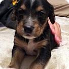 Adopt A Pet :: Baby Blue's Blue